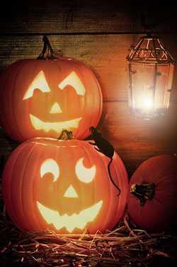 Two jack-o-lanterns sitting with smiling faces and a black rat sitting on one of them.