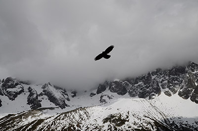 A bird is shown flying above mountains as an example of a symbol of freedom.